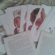Картинки-открытки.