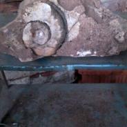 Окаменелость беспозвоночного каменноугольный период